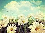 Vintage look of summer daisies in grass Stock Photo - Royalty-Free, Artist: Sandralise                    , Code: 400-06695283