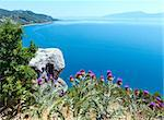 Summer  Adriatic Sea coastline view with tree, thistle plant and stone in front (Croatia) Stock Photo - Royalty-Free, Artist: Yuriy                         , Code: 400-06696046