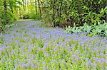 botanical garden ; Keukenhof gardens Stock Photo - Royalty-Free, Artist: jordache                      , Code: 400-06698995