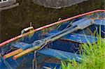 old rowing boat with paddles in a canal Stock Photo - Royalty-Free, Artist: hansenn                       , Code: 400-06699673