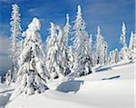 Snow Covered Conifer Forest in Winter, Grafenau, Lusen, Bavarian Forest National Park, Bavaria, Germany Stock Photo - Premium Royalty-Free, Artist: Raimund Linke, Code: 600-06701789