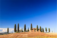 Cypress trees (Cupressus sempervirens) in front of Tuscan villa in summer, Val d'Orcia, Tuscany, Italy Stock Photo - Premium Rights-Managednull, Code: 700-06701743