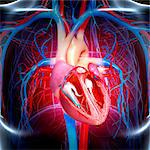 Human heart, computer artwork. Stock Photo - Premium Royalty-Free, Artist: Universal Images Group, Code: 679-06711322