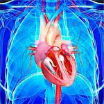 Human heart, computer artwork. Stock Photo - Premium Royalty-Free, Artist: Science Faction, Code: 679-06711323