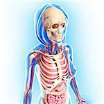 Female anatomy, computer artwork. Stock Photo - Premium Royalty-Free, Artist: Science Faction, Code: 679-06711367