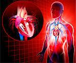 Human heart, computer artwork. Stock Photo - Premium Royalty-Free, Artist: Universal Images Group, Code: 679-06712915