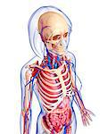 Female anatomy, computer artwork. Stock Photo - Premium Royalty-Free, Artist: Science Faction, Code: 679-06713144