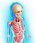Female anatomy, computer artwork. Stock Photo - Premium Royalty-Free, Artist: Science Faction, Code: 679-06713354