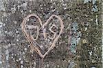 Heart and initials carvings on tree trunk Stock Photo - Premium Rights-Managed, Artist: Christina Krutz, Code: 700-06713971