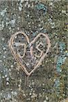 Heart and initials carvings on tree trunk Stock Photo - Premium Rights-Managed, Artist: Christina Krutz, Code: 700-06713972