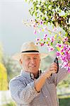 Older man gardening outdoors Stock Photo - Premium Royalty-Free, Artist: Blend Images, Code: 649-06716691