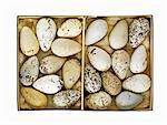 Box of old speckled eggs Stock Photo - Premium Royalty-Free, Artist: Robert Harding Images, Code: 614-06719770