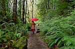 Woman with umbrella walking in forest Stock Photo - Premium Royalty-Free, Artist: Ikon Images, Code: 614-06719899