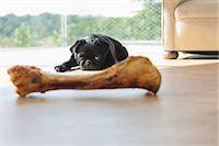 pvg - Dog resisting bone in living room Stock Photo - Premium Royalty-Freenull, Code: 6113-06720938