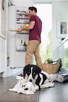 fridge - Dog chewing up toilet paper in kitchen Stock Photo - Premium Royalty-Freenull, Code: 6113-06720941