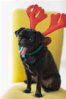 pvg - Panting dog wearing reindeer horns Stock Photo - Premium Royalty-Freenull, Code: 6113-06720976