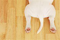 Dog bottom Stock Photo - Premium Rights-Managednull, Code: 859-06725073