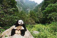 Panda Stock Photo - Premium Rights-Managednull, Code: 859-06725359