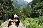 Panda Stock Photo - Premium Rights-Managed, Artist: Aflo Relax, Code: 859-06725359