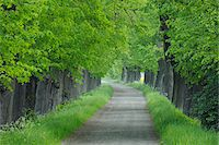 Tree lined rural road with lush green foliage. Bavaria, Germany. Stock Photo - Premium Royalty-Freenull, Code: 600-06732585