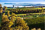 Overview of wine country near Pokolbin, Hunter Valley, New South Wales, Australia Stock Photo - Premium Rights-Managed, Artist: R. Ian Lloyd, Code: 700-06732747