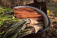 Fresh Vegetables, Croatia, Slavonia, Europe Stock Photo - Premium Royalty-Freenull, Code: 6115-06732928