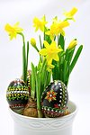 Yellow flowers of spring daffodils and easter eggs on a white background Stock Photo - Royalty-Free, Artist: ondrej83                      , Code: 400-06745799