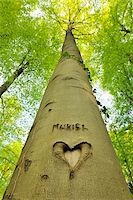Heart and Name Carved into Beech Tree Trunk, Hallerbos, Halle, Flemish Brabant, Vlaams Gewest, Belgium Stock Photo - Premium Royalty-Freenull, Code: 600-06752582