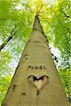 Heart and Name Carved into Beech Tree Trunk, Hallerbos, Halle, Flemish Brabant, Vlaams Gewest, Belgium Stock Photo - Premium Royalty-Free, Artist: Raimund Linke, Code: 600-06752582