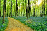 Path through Beech Forest with Bluebells in Spring, Hallerbos, Halle, Flemish Brabant, Vlaams Gewest, Belgium Stock Photo - Premium Royalty-Freenull, Code: 600-06752603