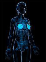 Breast anatomy, computer artwork. Stock Photo - Premium Royalty-Freenull, Code: 679-06754318