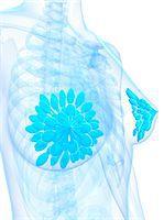 Breast anatomy, computer artwork. Stock Photo - Premium Royalty-Freenull, Code: 679-06754423