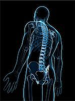 spinal column - Male skeleton, computer artwork. Stock Photo - Premium Royalty-Freenull, Code: 679-06754785