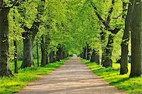 scenic and spring (season) - Lime Tree Avenue in Spring, Aschaffenburg, Bavaria, Spessart, Germany Stock Photo - Premium Royalty-Freenull, Code: 600-06758226