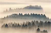 fog (weather) - Morning Mist, Kochelmoor, Bad Tolz-Wolfratshausen, Upper Bavaria, Bavaria, Germany Stock Photo - Premium Royalty-Freenull, Code: 600-06758359