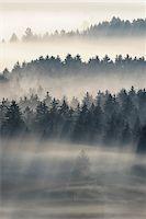 fog (weather) - Morning Mist, Kochelmoor, Bad Tolz-Wolfratshausen, Upper Bavaria, Bavaria, Germany Stock Photo - Premium Royalty-Freenull, Code: 600-06758361