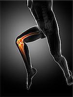 Knee pain, conceptual computer artwork. Stock Photo - Premium Royalty-Freenull, Code: 679-06780293