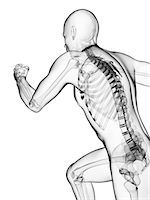 spinal column - Running skeleton, computer artwork. Stock Photo - Premium Royalty-Freenull, Code: 679-06780450