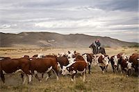 Gauchos with cattle at the Huechahue Estancia, Patagonia, Argentina, South America Stock Photo - Premium Rights-Managednull, Code: 841-06806262
