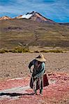 Farming quinoa, a super food, on the Bolivian Altiplano, Bolivia, South America Stock Photo - Premium Rights-Managed, Artist: Robert Harding Images, Code: 841-06807383