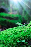 sprout - Green leaves and moss Stock Photo - Premium Royalty-Freenull, Code: 622-06809615