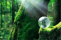 Glass sphere on a tree Stock Photo - Premium Royalty-Freenull, Code: 622-06809619