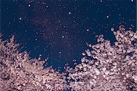 fantastically - Stars and cherry blossoms Stock Photo - Premium Royalty-Freenull, Code: 622-06842081