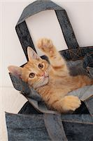 Cat Stock Photo - Premium Royalty-Freenull, Code: 622-06842170