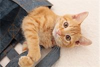 Cat Stock Photo - Premium Royalty-Freenull, Code: 622-06842175