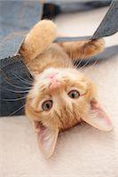 Cat Stock Photo - Premium Royalty-Freenull, Code: 622-06842176