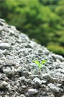 sprout - Green leaf sprouting from gravel Stock Photo - Premium Royalty-Freenull, Code: 622-06842621
