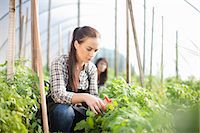 farmhand (female) - Young woman working at vegetable farm Stock Photo - Premium Royalty-Freenull, Code: 649-06844237