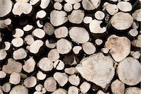 supply - A stack of cut timber Stock Photo - Premium Royalty-Freenull, Code: 649-06844896