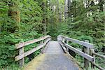 Wooden Foot Bridge Along Hiking Trail in Silver Falls State Park Oregon